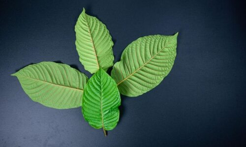 The Essential Guide to Know The Right Dose Of Kratom